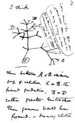 Charles Darwin's 1837 sketch, his first diagram  of an evolutionary tree from his First Notebook on Transmutation of  Species via Wikimedia CC